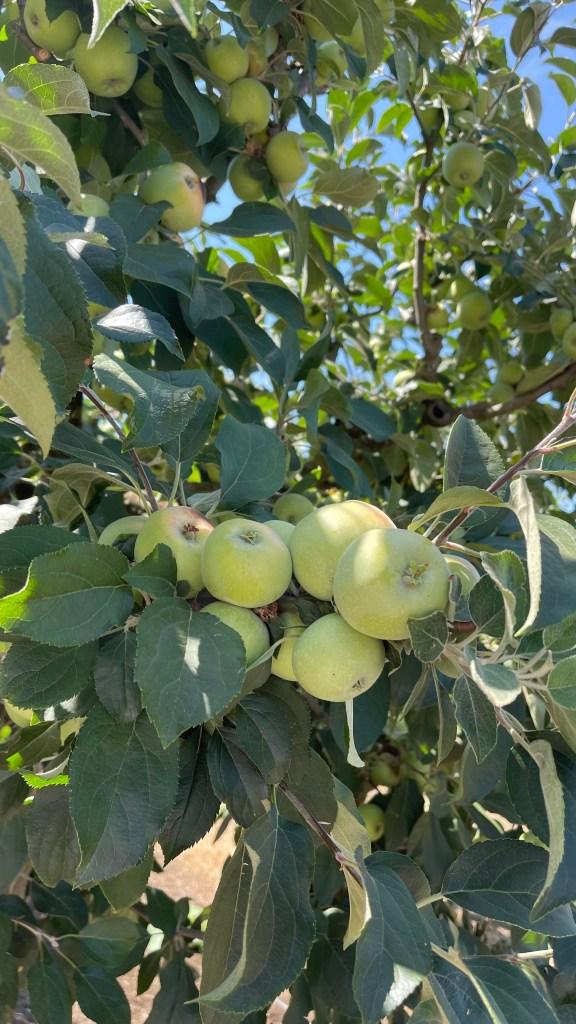 Jordan Winery vegetable and fruit garden