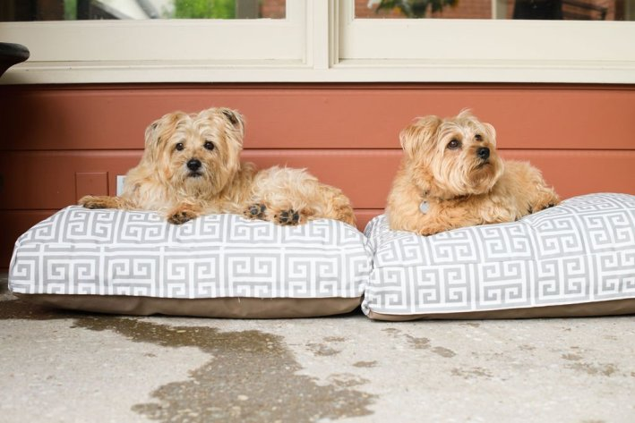 Majestic Pet outdoor pet beds in size small