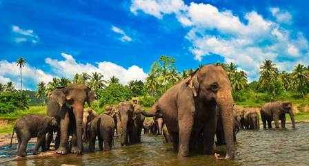 Sri Lanka - the new rising travel star