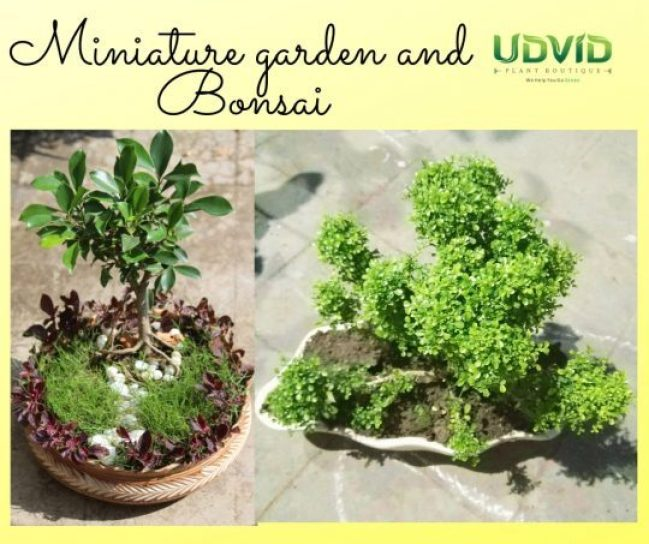Have your own personal garden no matter how big or small, courtesy Udvid Plant Boutique