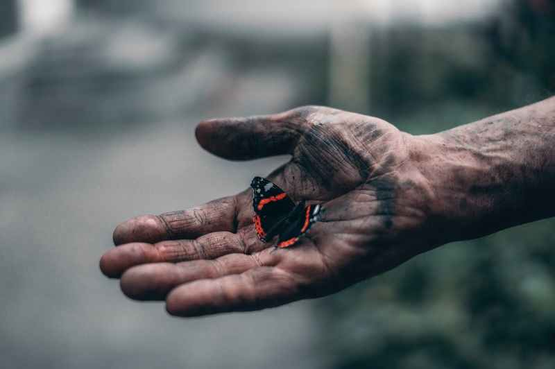 black and red butterfly on person s hand