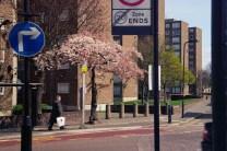 Cherry Tree in 2010