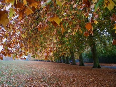 Autumn, October 2011