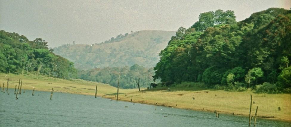 Periyar National Park, Kerala. Can you spot the elephant?