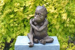 'Please' Baby Orangutan