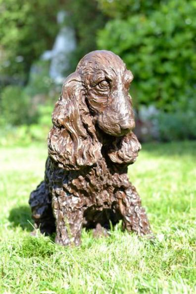 Cocker Spaniel, Sitting