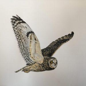The Huntress owl print