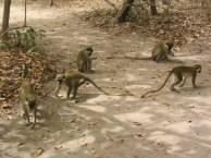 04Bijilo Forest 055