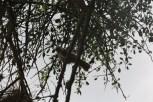 Day 3 Serengeti (280) - Copy - Copy - Copy