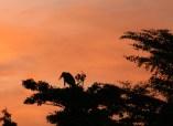 Sunrise Stork