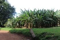 10b Entebbe Gardens (135)