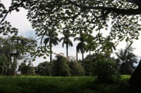 10b Entebbe Gardens (26)