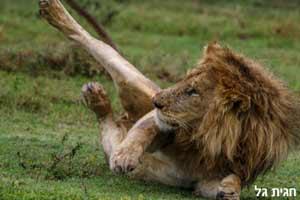 השמורות החשובות וקינוח בזנזיבר