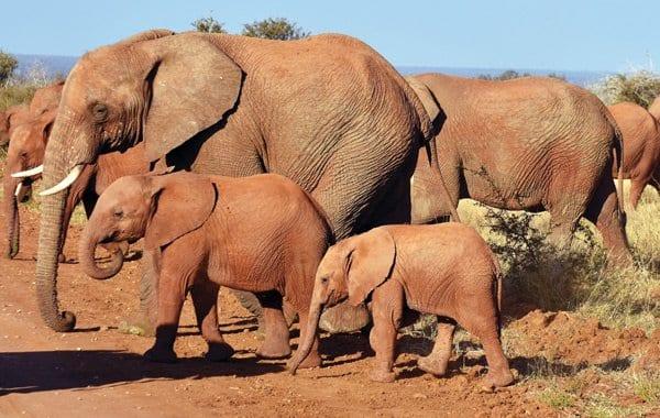 TM Family South Africa Safari