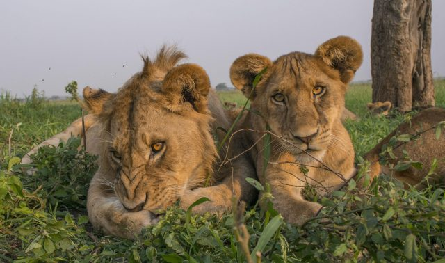 9 DAY SERENGETI BIG FIVE TRACKING PACKAGE SAFARI