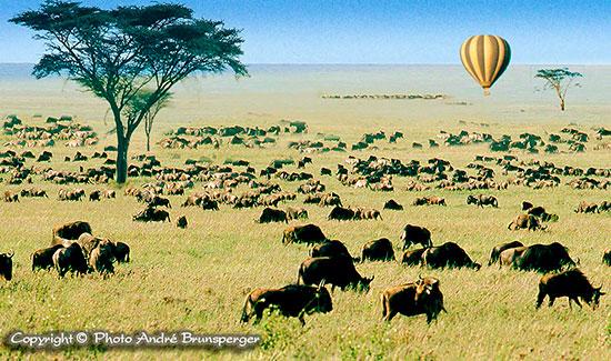Voyage en Tanzanie. Grande migration des Gnous et des Zèbres dans le Serengeti en Tanzanie