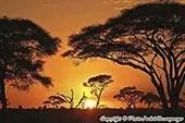 Coucher de soleil en Tanzanie