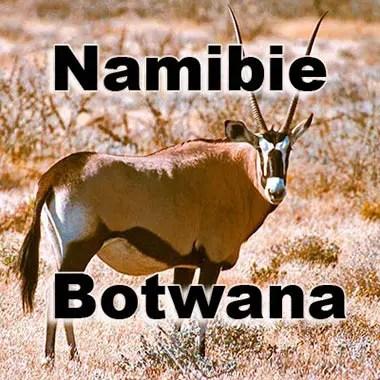 Orix Namibie Botswana