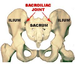 anatomy pics of pelvis and sacroiliac joint. It hurts when I run.