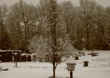 Winter wonderland again 0007