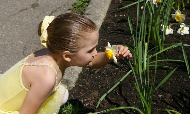 Heuschnupfen aufgrund von Kindheitserlebnissen