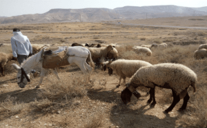 Bedouin Shepherds in Jordan Valley