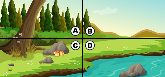spot the owl quiz answers