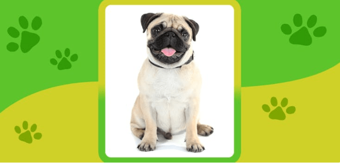 Name the Dog breed! Quiz Answers video facts