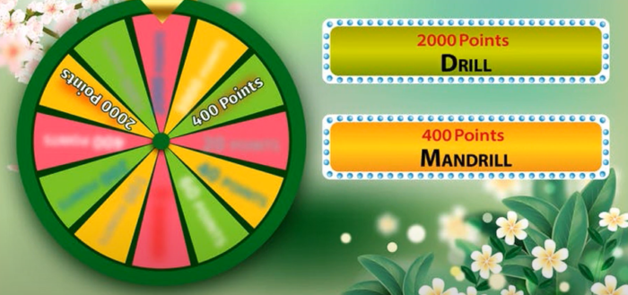 lucky wheel spring edition quiz answers video facts