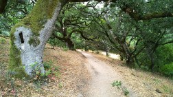 Oak grove along a park trail