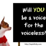 How to Be an Effective Animal Advocate