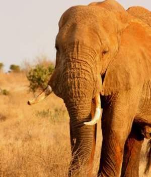 2015 Animal Advocacy Wins