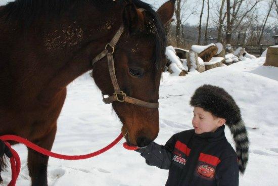 Dancer's Horse Rescue