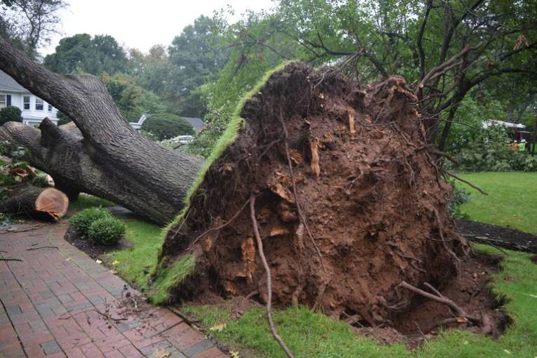 More than 350 Customers Still Without Power in Wake of Sudden     The  microburst  storm uprooted massive trees and downed power lines  The   microburst  storm uprooted massive trees and downed power lines