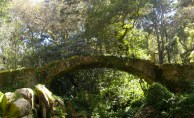 Queen's Fern Garden in Pena Park, Sintra