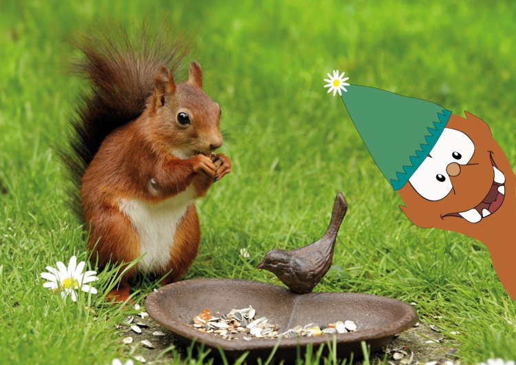 red squirrels in Helsinki on Tapsy Blog