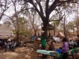 Picture of the Standing Mahogany Tree that Fell after the Thunderstorm in Bouba Njidda Wildlife Park at Garua, Cameroon Republic