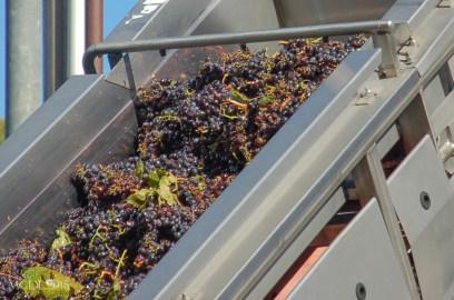 Winery 7