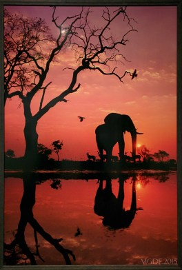 Elephant at Dawn, Botswana, 1989.