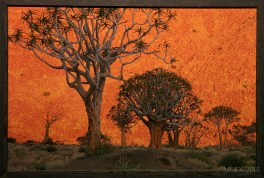 I thought it was a painting! Quiver Trees, South Africa, 2001.