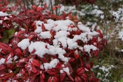2014年12月初積雪