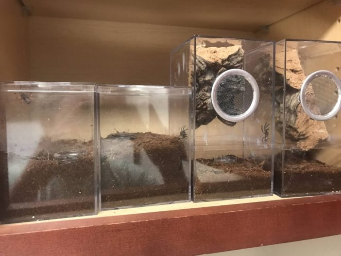 tarantula enclosures