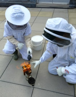 Princesshay Bees, Exeter