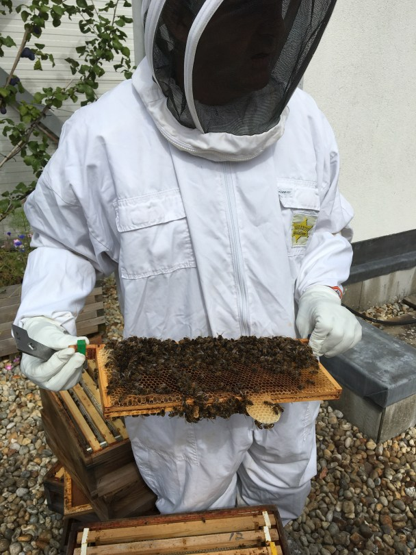 Princesshay Bees, Exeter