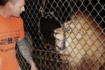 Evin LoGiudice, one of the handlers of the animals, communicating with Freddy, the lion, during a nighttime tour at Catty Shack Ranch in Jacksonville, Florida on Wednesday, Jan. 25, 2017. The sanctuary has tours on selective days of the week, and all of the entry fees from the tours are utilized for the well-being of the animals.