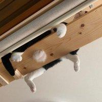 猫の出ベソ