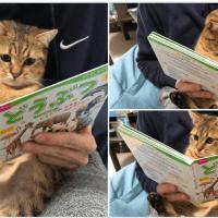 どうぶつの絵本をみせたらめちゃくちゃ真剣に読んでる