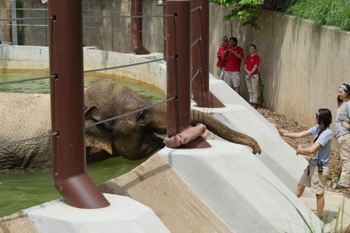 Zoo keeper waving hand to elephant with his trunk extended at the Smithsonian National Zoological Park