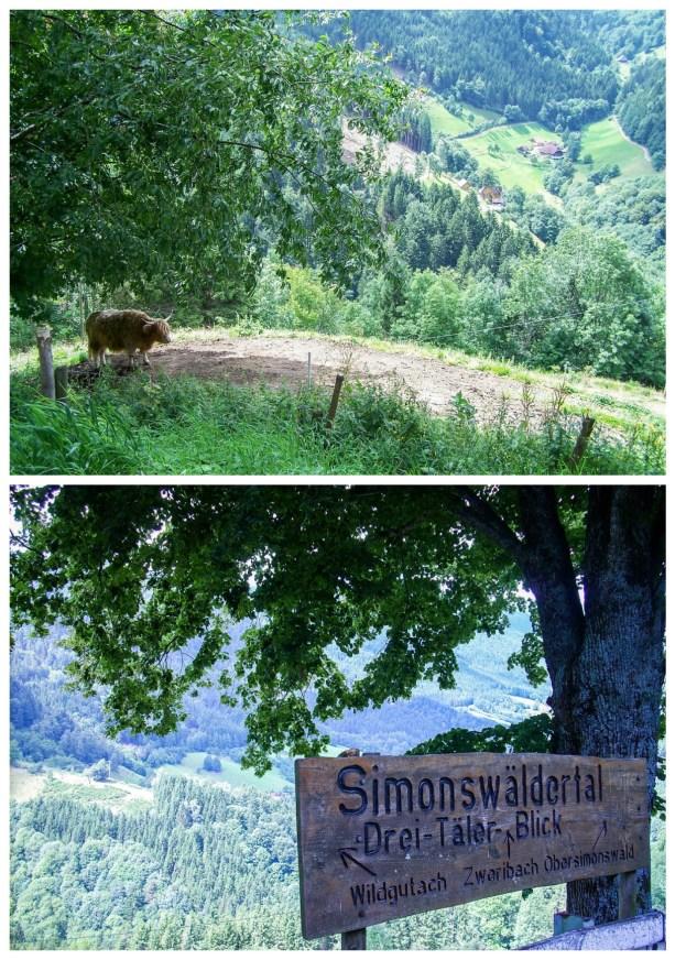 Schwarzwald photos in the hills- sign of Simonswäldertal, Drei-Täler-Blick