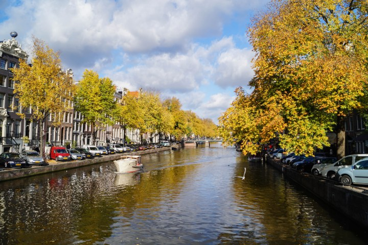 Canal in Amsterdam lined with trees and cars